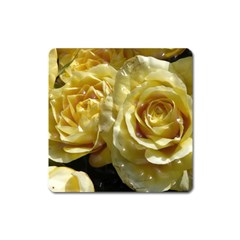 Yellow Roses Square Magnet