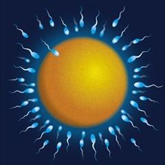 Sperm Fertilising Egg  Magic Photo Cubes by ScienceGeek