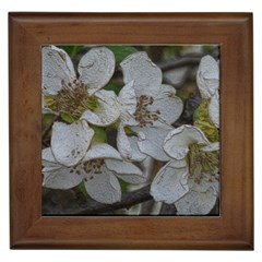 Amazing Garden Flowers 32 Framed Tiles by MoreColorsinLife