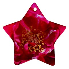 Red Rose Ornament (star)  by timelessartoncanvas