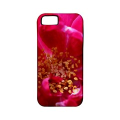 Red Rose Apple Iphone 5 Classic Hardshell Case (pc+silicone) by timelessartoncanvas