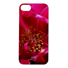 Red Rose Apple Iphone 5s Hardshell Case by timelessartoncanvas