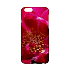 Red Rose Apple Iphone 6/6s Hardshell Case by timelessartoncanvas