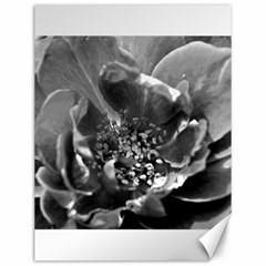 Black And White Rose Canvas 12  X 16