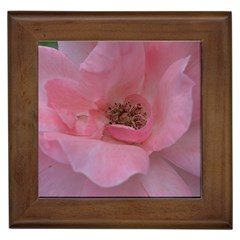 Pink Rose Framed Tiles