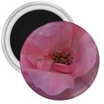 Pink Rose 3  Magnets