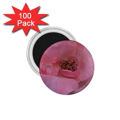 Pink Rose 1.75  Magnets (100 pack)