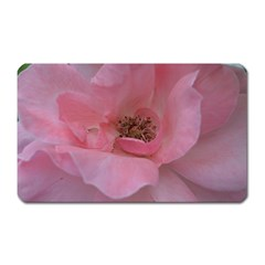 Pink Rose Magnet (Rectangular)