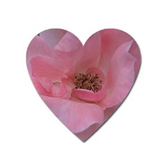 Pink Rose Heart Magnet