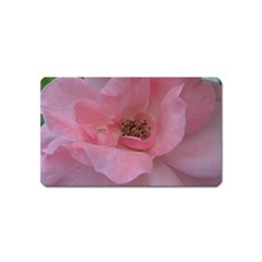 Pink Rose Magnet (Name Card)