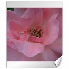 Pink Rose Canvas 8  x 10
