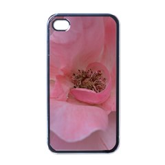 Pink Rose Apple iPhone 4 Case (Black)