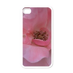Pink Rose Apple iPhone 4 Case (White)