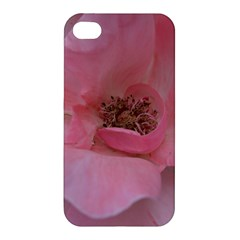 Pink Rose Apple iPhone 4/4S Premium Hardshell Case