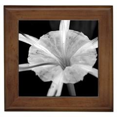 Exotic Black And White Flower 2 Framed Tiles by timelessartoncanvas