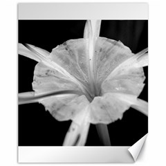 Exotic Black and White Flower 2 Canvas 11  x 14   by timelessartoncanvas