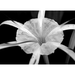 Exotic Black And White Flower 2 Birthday Cake 3d Greeting Card (7x5)