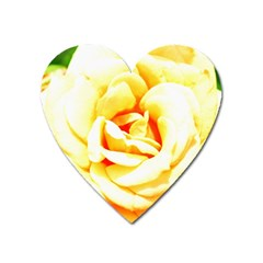 Orange Yellow Rose Heart Magnet by timelessartoncanvas
