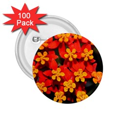 Orange And Red Weed 2 25  Buttons (100 Pack)  by timelessartoncanvas