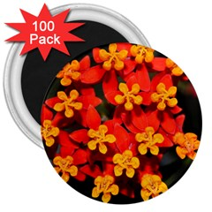 Orange And Red Weed 3  Magnets (100 Pack) by timelessartoncanvas