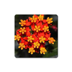 Orange And Red Weed Square Magnet by timelessartoncanvas
