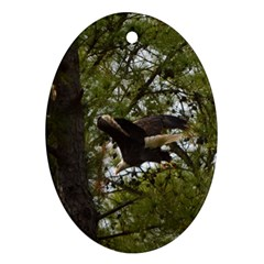 Bald Eagle Ornament (oval)  by timelessartoncanvas