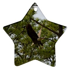 Bald Eagle 2 Ornament (star)  by timelessartoncanvas
