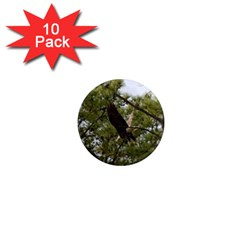 Bald Eagle 2 1  Mini Magnet (10 Pack)  by timelessartoncanvas