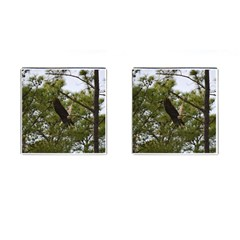Bald Eagle 2 Cufflinks (square) by timelessartoncanvas
