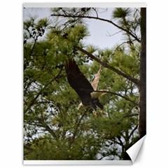 Bald Eagle 2 Canvas 36  X 48   by timelessartoncanvas
