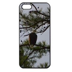 Bald Eagle 4 Apple Iphone 5 Seamless Case (black) by timelessartoncanvas