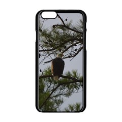 Bald Eagle 4 Apple Iphone 6 Black Enamel Case by timelessartoncanvas