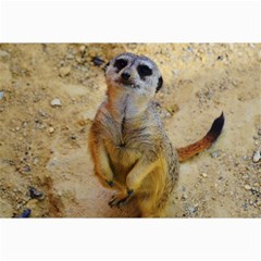 Lovely Meerkat 515p Collage 12  X 18