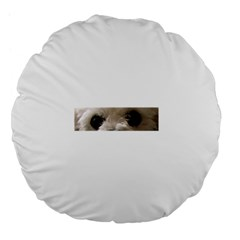 Bolognese Eyes Large 18  Premium Flano Round Cushions by TailWags