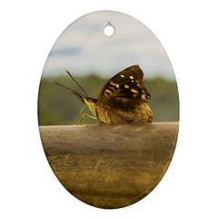 Butterfly Against Blur Background At Iguazu Park Ornament (oval)  by dflcprints