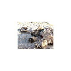 Cairn Terrier Sleeping On Beach YOU ARE INVITED 3D Greeting Card (8x4)  by TailWags