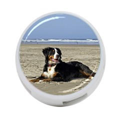 Bernese Mountain Dog Laying On Beach 4 Port Usb Hub (one Side) by TailWags