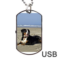 Bernese Mountain Dog Laying On Beach Dog Tag Usb Flash (two Sides)  by TailWags