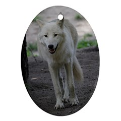 White Wolf Ornament (Oval)  by MoreColorsinLife