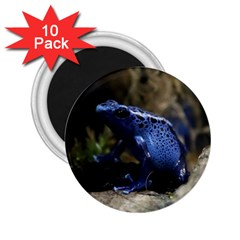 Blue Poison Arrow Frog 2 25  Magnets (10 Pack)  by stineshop