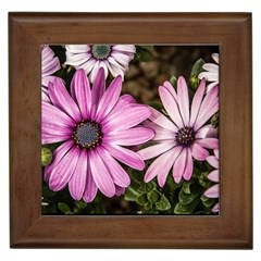 Beautiful Colourful African Daisies  Framed Tiles by OZMedia