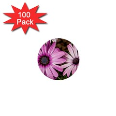Beautiful Colourful African Daisies  1  Mini Buttons (100 Pack)  by OZMedia