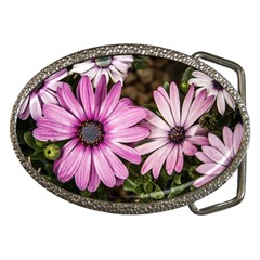 Beautiful Colourful African Daisies  Belt Buckles by OZMedia