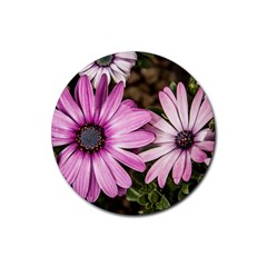 Beautiful Colourful African Daisies  Rubber Coaster (round)