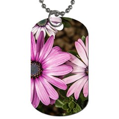 Beautiful Colourful African Daisies  Dog Tag (two Sides) by OZMedia