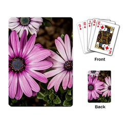 Beautiful Colourful African Daisies  Playing Card by OZMedia