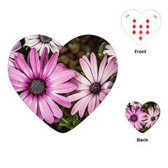 Beautiful Colourful African Daisies  Playing Cards (heart)  by OZMedia