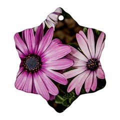 Beautiful Colourful African Daisies  Snowflake Ornament (2 Side) by OZMedia