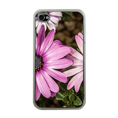 Beautiful Colourful African Daisies  Apple Iphone 4 Case (clear) by OZMedia
