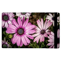 Beautiful Colourful African Daisies  Apple iPad 3/4 Flip Case by OZMedia
